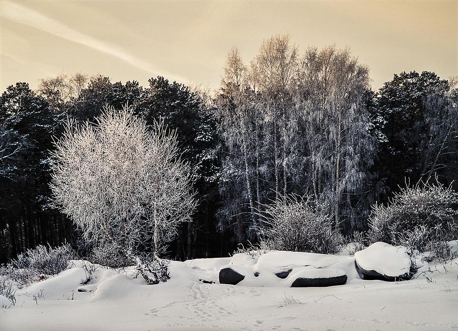 Landscape Photograph - Frosted Trees by Vladimir Kholostykh