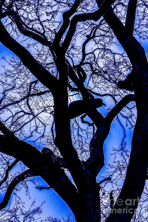 Oak Tree Photograph - Frosty Blue Abstract by Mitch Shindelbower