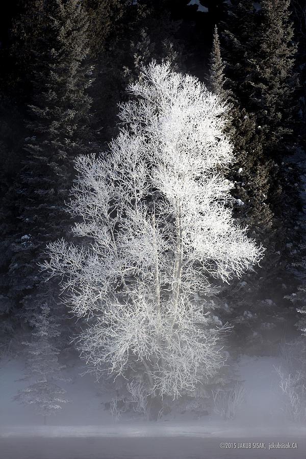 Boreal Photograph - Frosty by Jakub Sisak