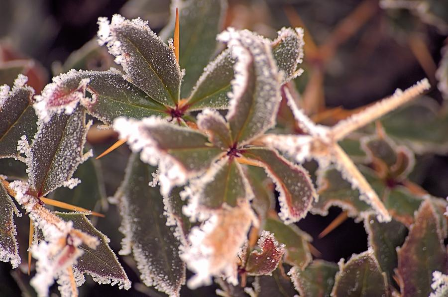 Nature Photograph - Frosty Morning by Dave Woodbridge