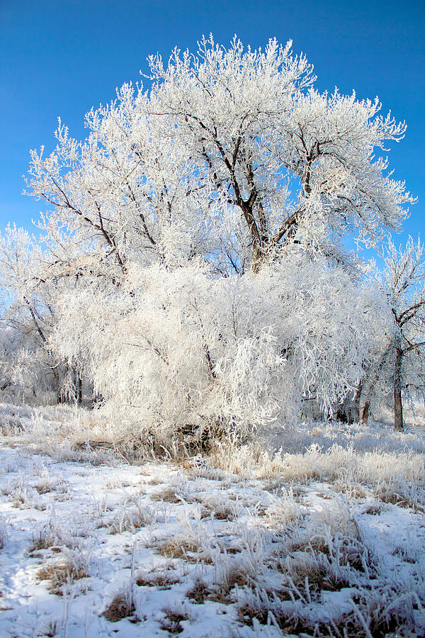 Frost Photograph - Frosty Morning by Shane Bechler
