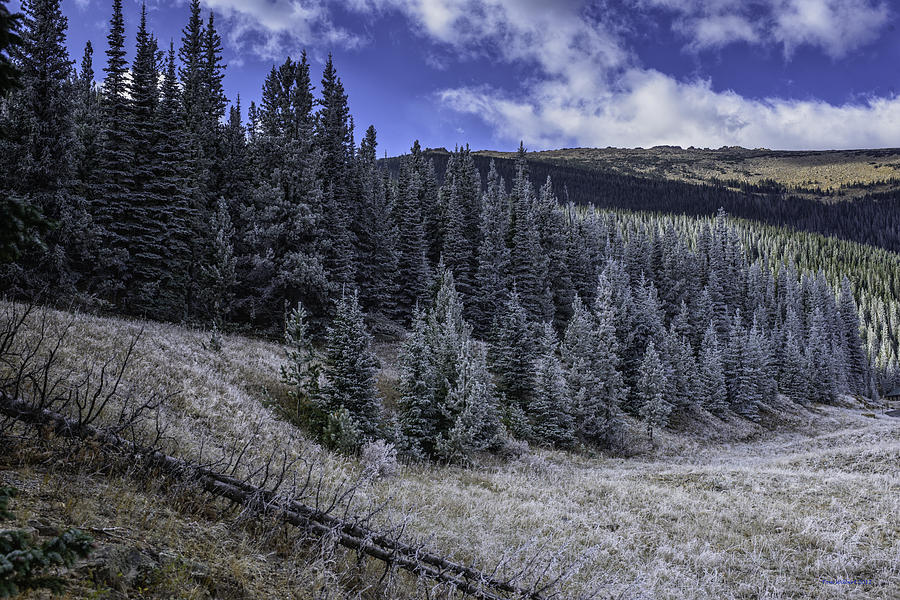 Pines Photograph - Frosty Pines by Tom Wilbert