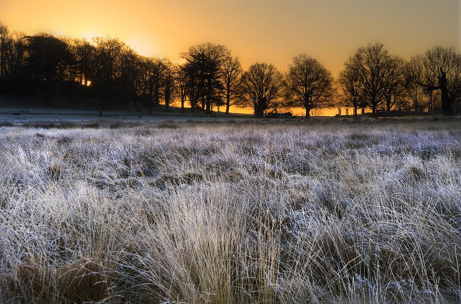 Frosty Winter Landscape Across Field Towards Vibrant