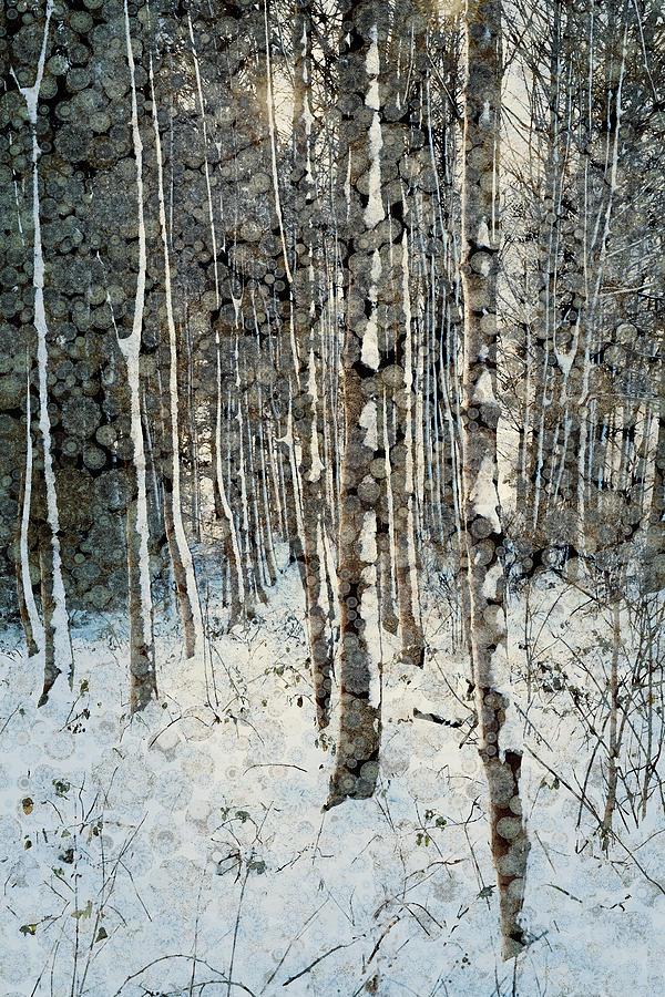 Frosty Winter Trees At Dawn Digital Art by Andrew Bret Wallis
