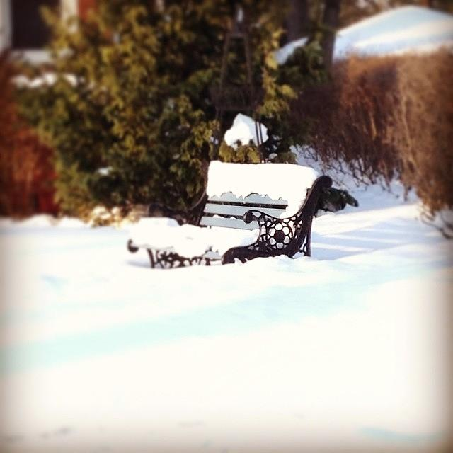 Frozen Bench Photograph by Frank J Casella