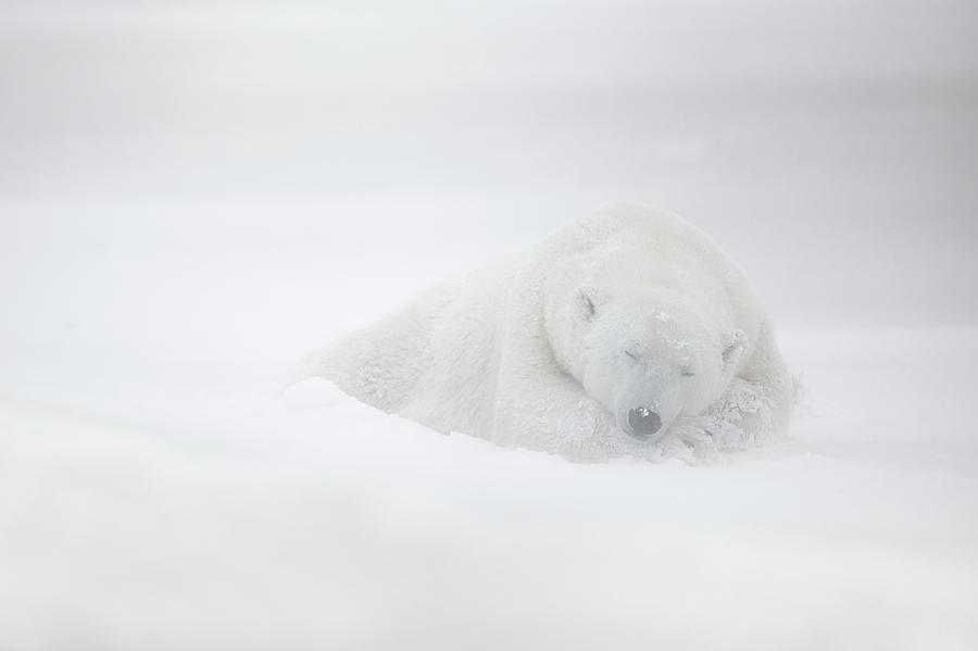 Churchill Photograph - Frozen Dreams by Marco Pozzi