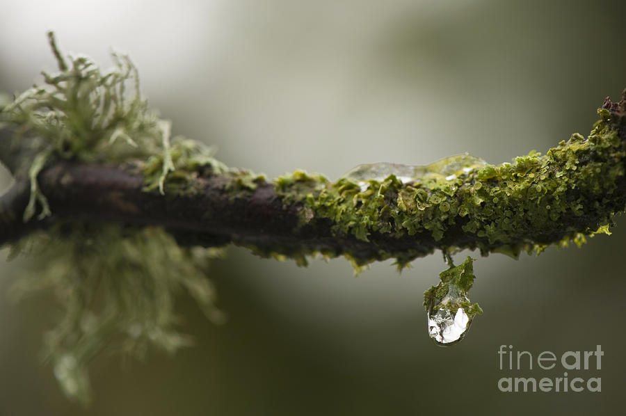 Abstract Photograph - Frozen Droplet by Anne Gilbert