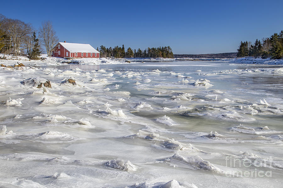 Maine Photograph - Frozen by Evelina Kremsdorf