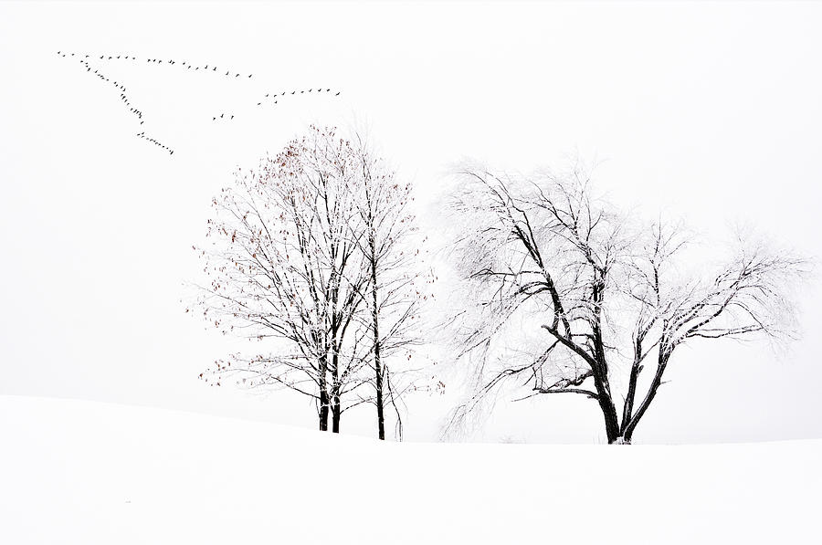 Winter Scene Photograph - Frozen Flight by Emily Stauring