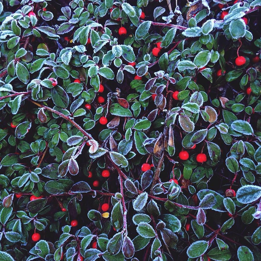 Frozen Fruit Tree Photograph by Romy Lahoud / Eyeem