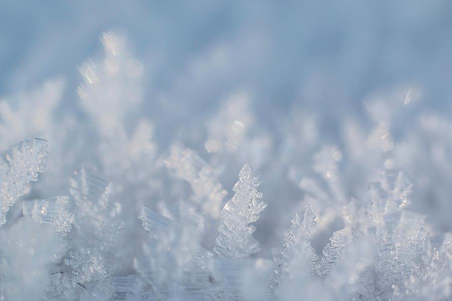 Frozen Photograph - Frozen by Illusorium Illustration