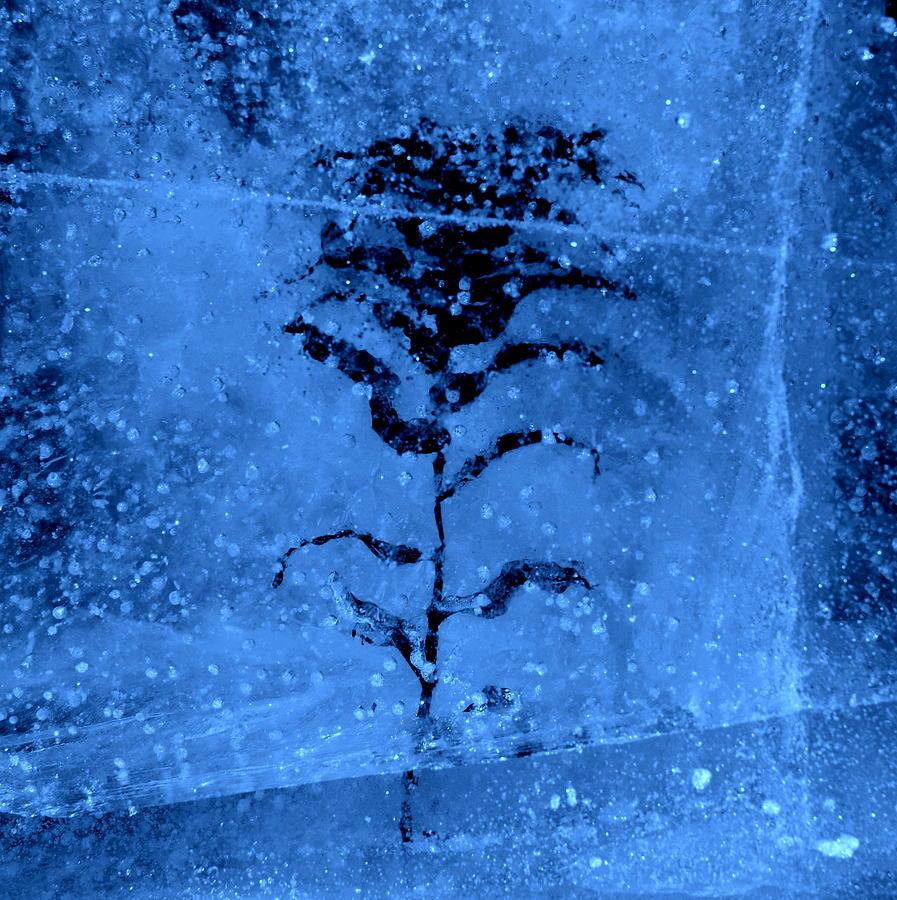 frozen by Jeremiah John McBride