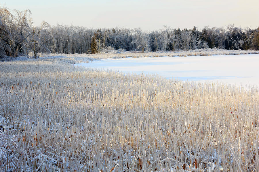 Frozen Lake And Ice Coated Trees And Photograph by Louise Heusinkveld