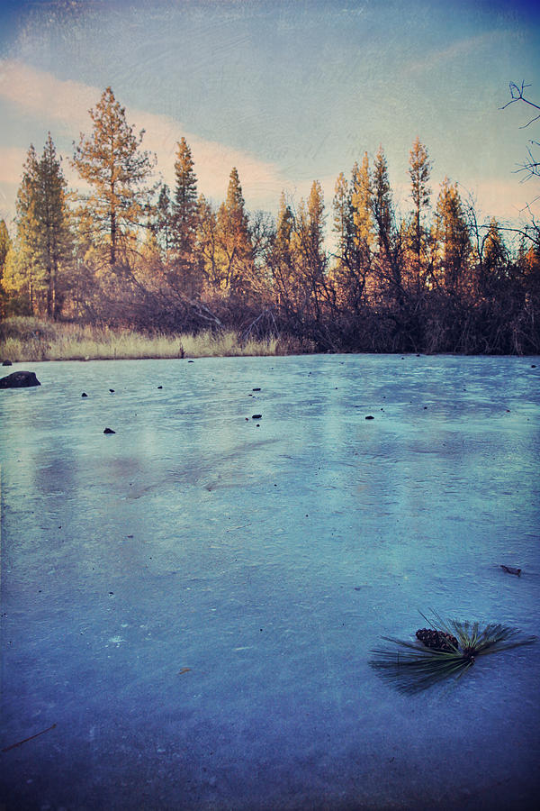 Burney Photograph - Frozen by Laurie Search