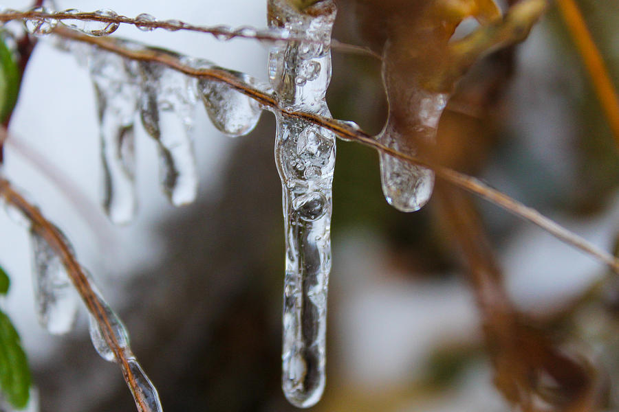 Icicle Photograph - Frozen Purity by Hannah Miller