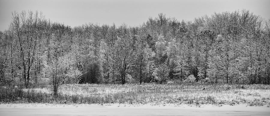 B&w Photograph - Frozen by Sebastian Musial