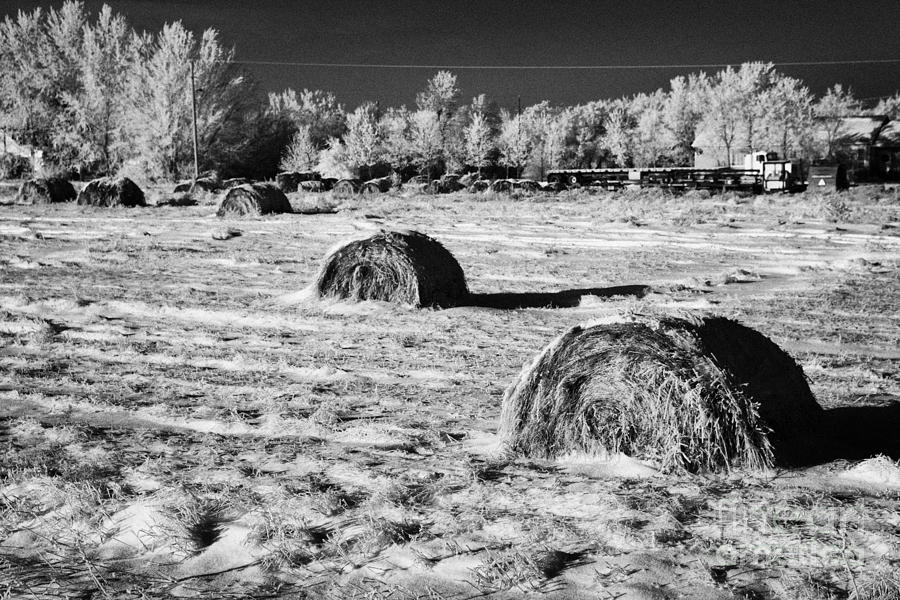 Frozen Photograph - frozen snow covered hay bales in a field Forget Saskatchewan Canada by Joe Fox