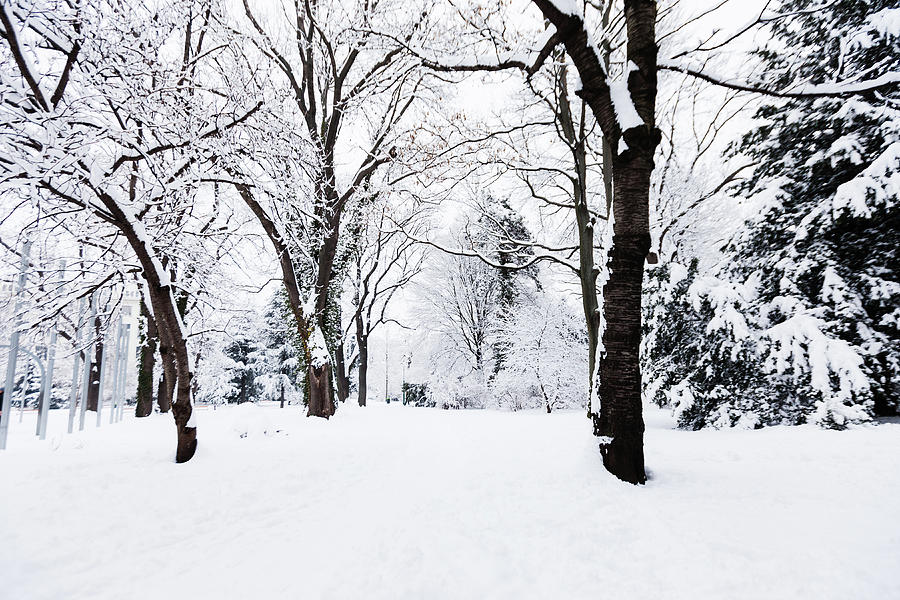 Frozen Tree On A Snow Field Photograph by Lightkey