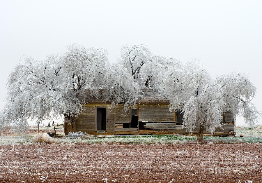Greeting Cards Photograph - Frozen Trees And Shack by Mae Wertz