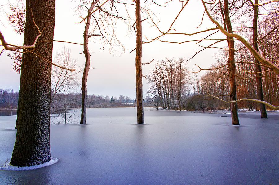 Frozen Trees Photograph by Bettina Lichtenberg