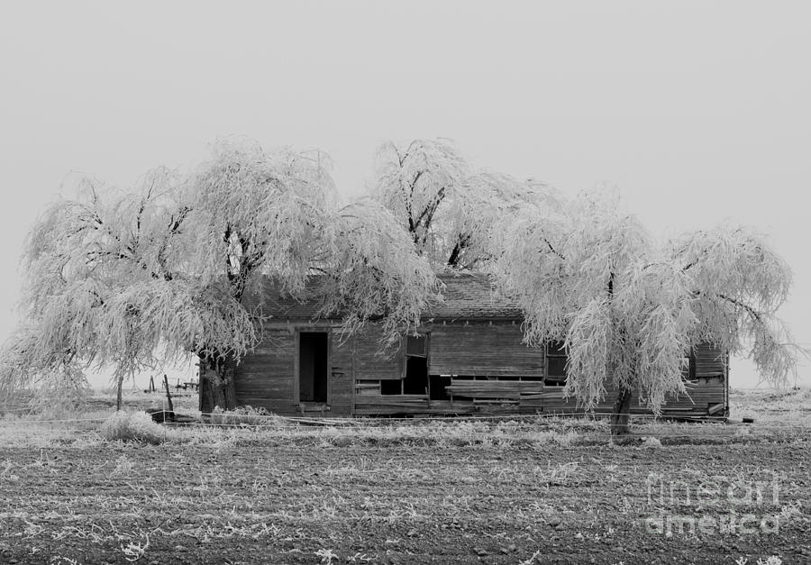 Frozen Trees Photograph - Frozen Trees In Black And White by Mae Wertz