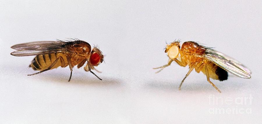 Red Flies In Bedroom Www Indiepedia Org