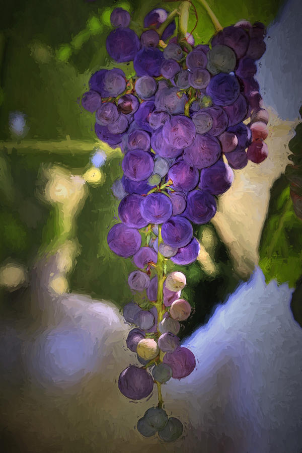 Grape Photograph - Fruit Of The Vine by Donna Kennedy