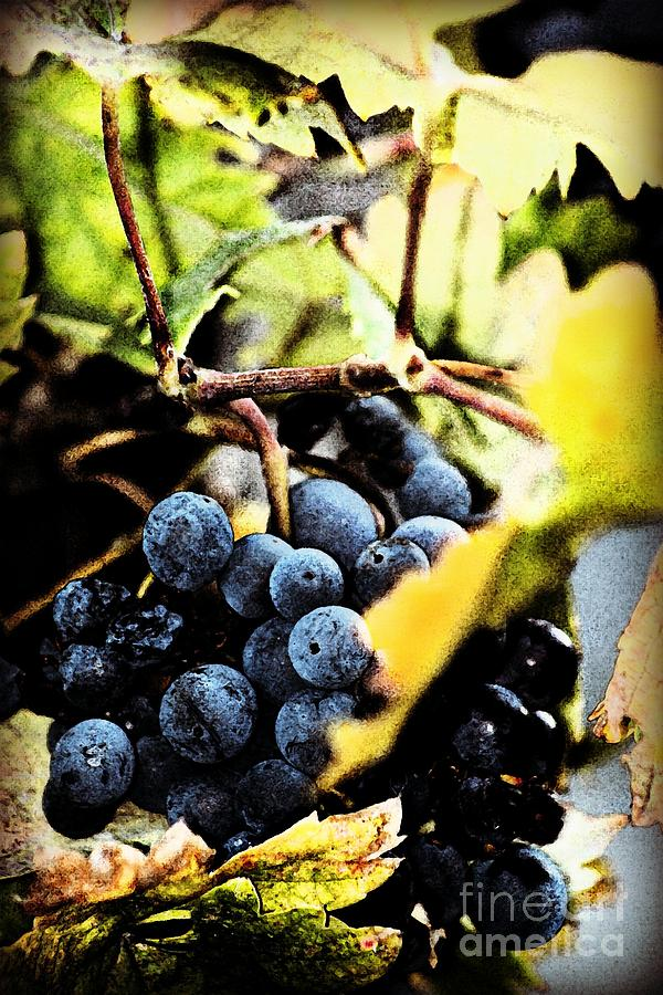 Grapes Photograph - Fruit Of The Vine by Leslie Hunziker