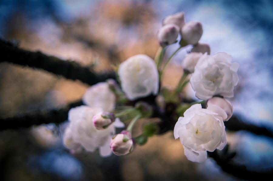 Fruitful Beginnings by Jen Baptist