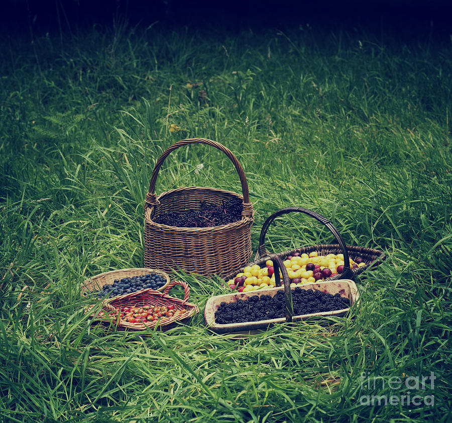 Foraged Photograph - Fruits Of The Hedgerow by Tim Gainey
