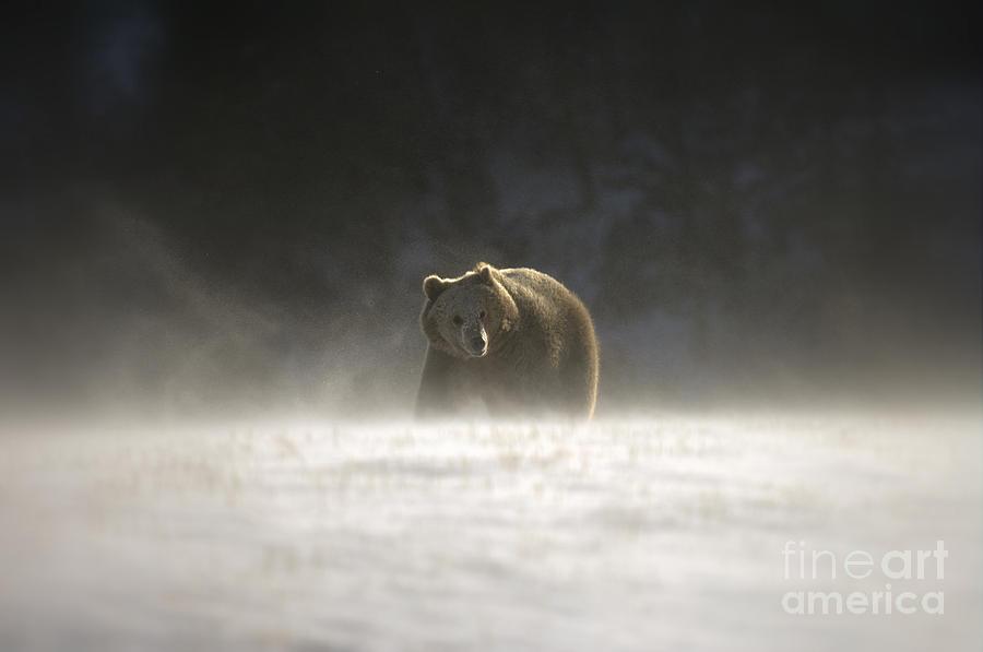 Blizzard Bear Photograph