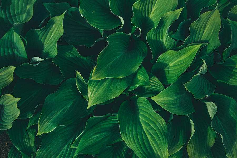 Full Frame Shot Of Plants Photograph by Sofya Moskalenko / EyeEm