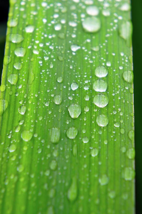 Full Frame Shot Of Wet Leaf Photograph by Elena Lyashenko / Eyeem