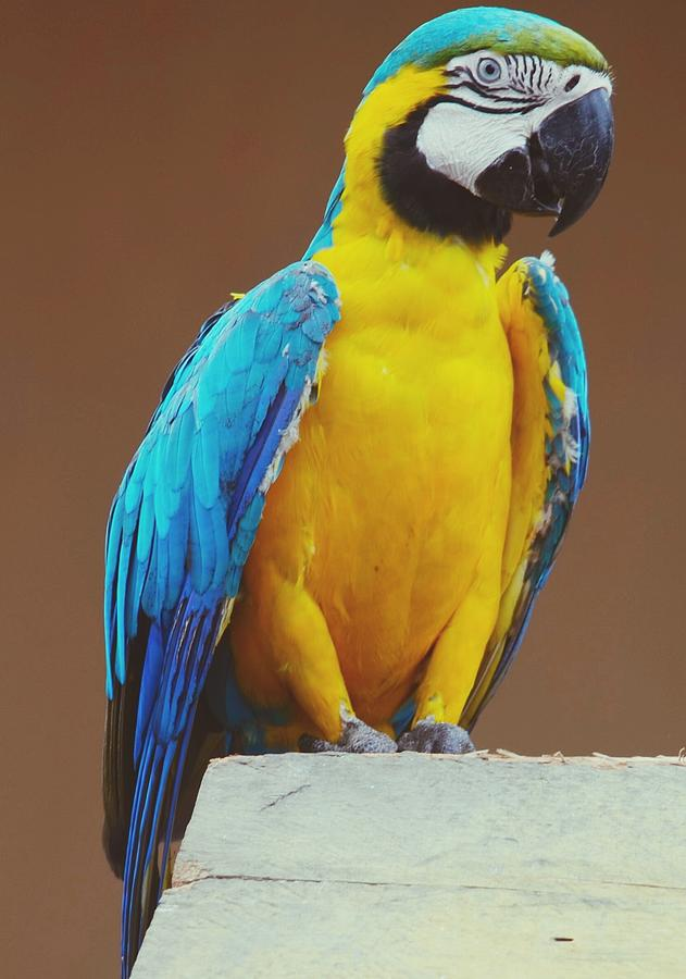 Full Length Of Blue And Yellow Macaw Photograph by Hans Dyckerhoff / Eyeem
