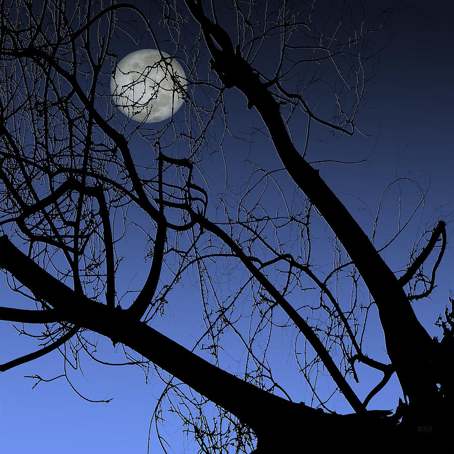 Silhouette Photograph - Full Moon And Black Winter Tree by Ben and Raisa Gertsberg