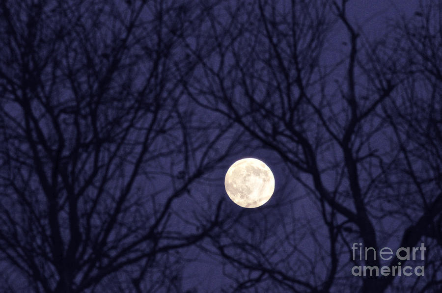 Moon Photograph - Full Moon Bare Branches by Thomas R Fletcher