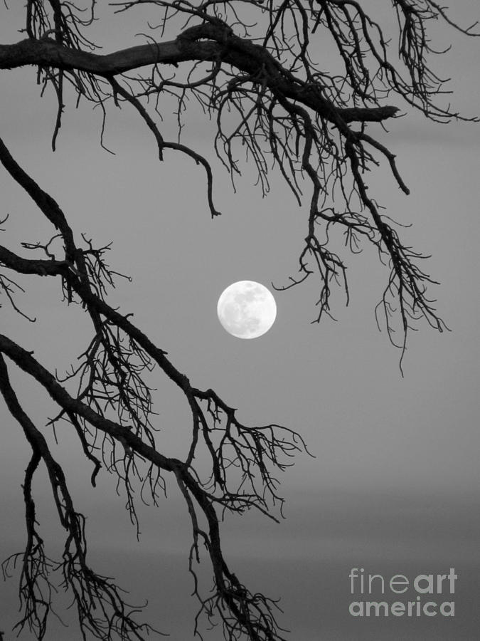 Full Moon Old Snag Photograph