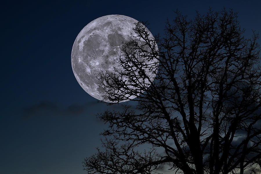 Full Moon Rising Photograph