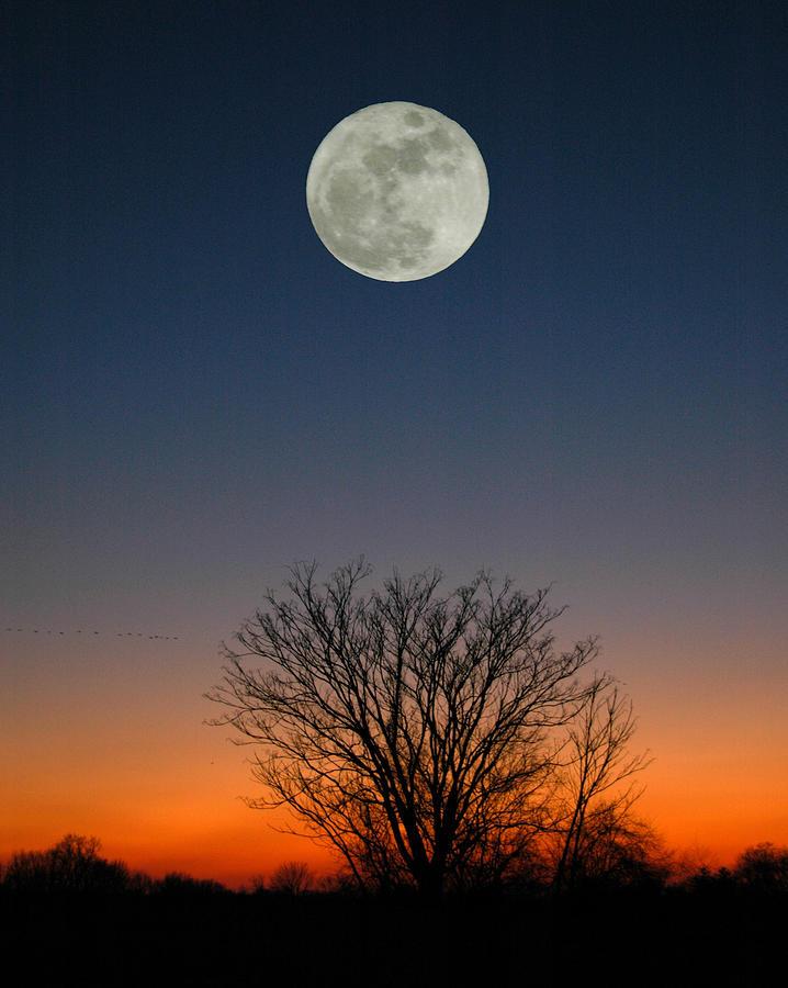 Full Moon Photograph - Full Moon Rising by Raymond Salani III