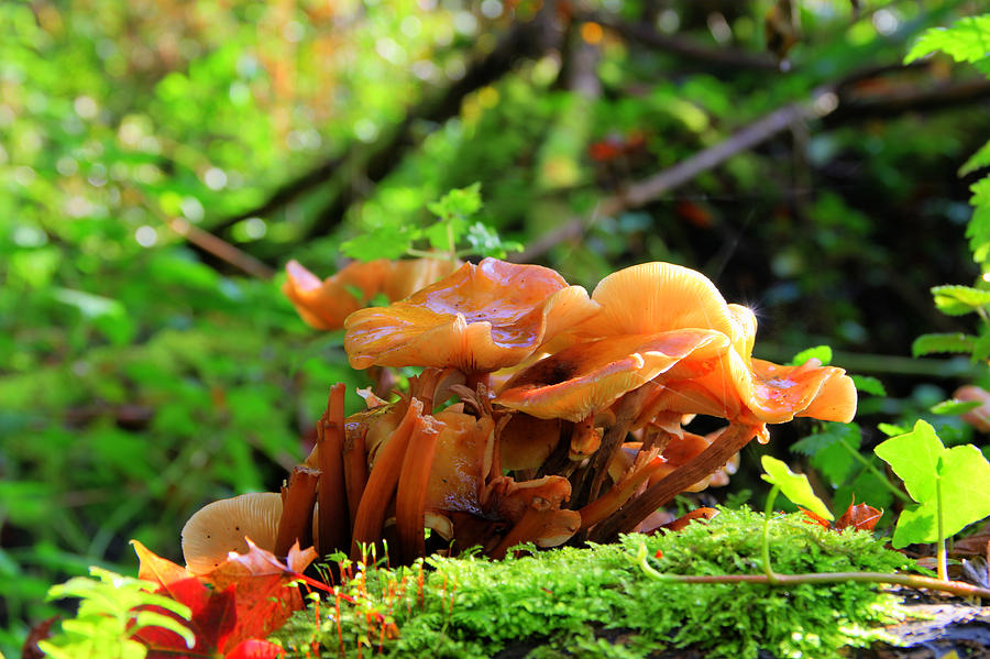 Fungi Photograph - Fungi  by Peggy Berger