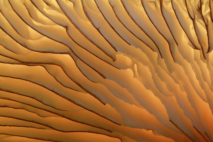 Biology Photograph - Fungus Gills Abstract by Nigel Downer/science Photo Library