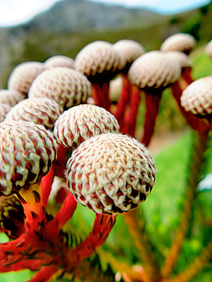Nature Photograph - Funky Fynbos by Katherine Smit