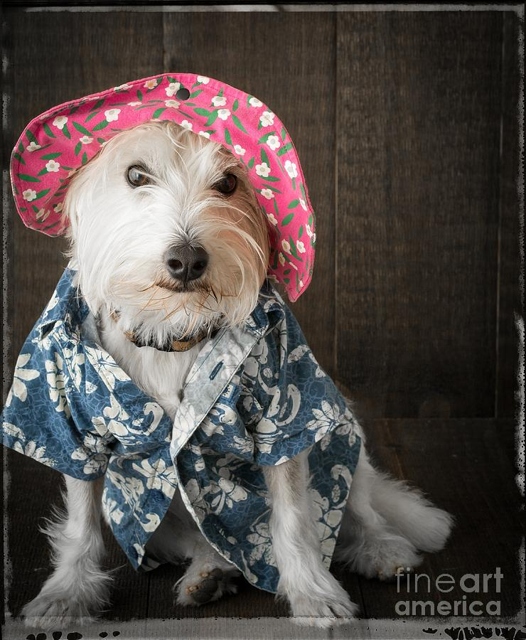 Humor Photograph - Funny Doggie by Edward Fielding