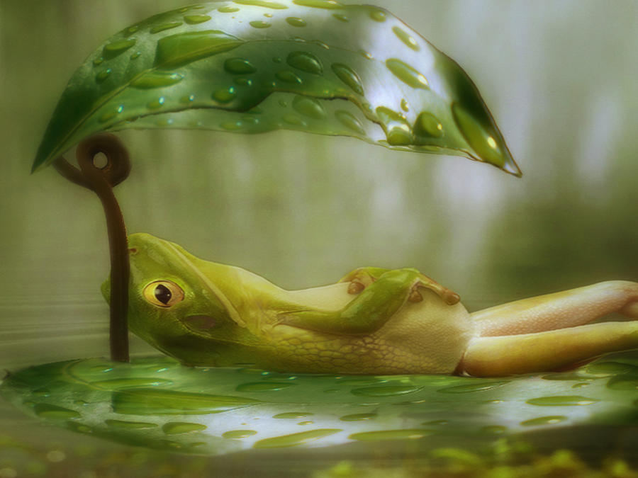 Lazin Photograph - Funny Happy Frog by Jack Zulli