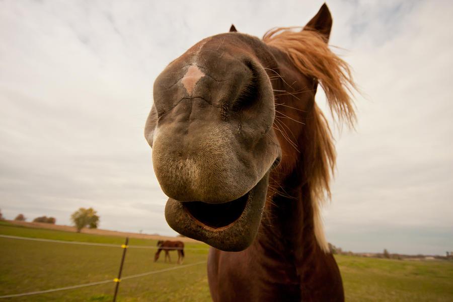 Horse Photograph - Funny Horse by Paulina Szajek