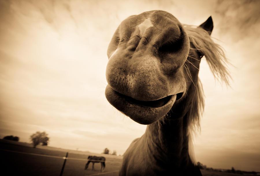 Horse Photograph - Funny Horse Sepia by Paulina Szajek