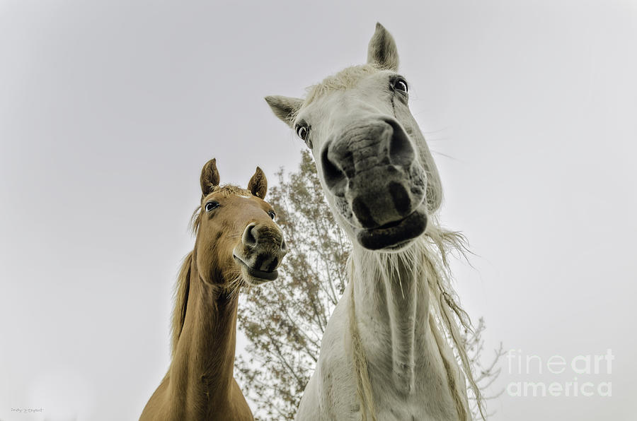Nature Photograph - Funny Horses by Cindy Bryant