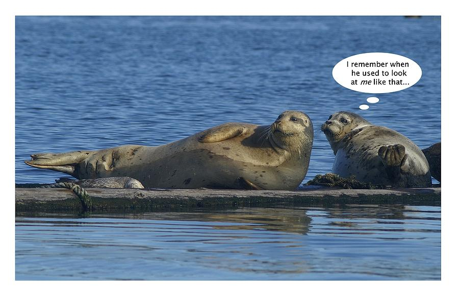 Funny Seals by David Armentrout