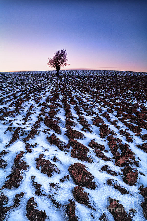 Snow Photograph - Furows In The Snow by John Farnan