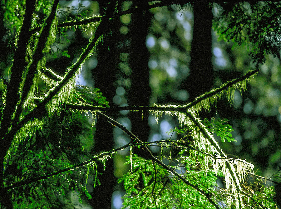 Furry Photograph - Furry Branches by Kim Lessel